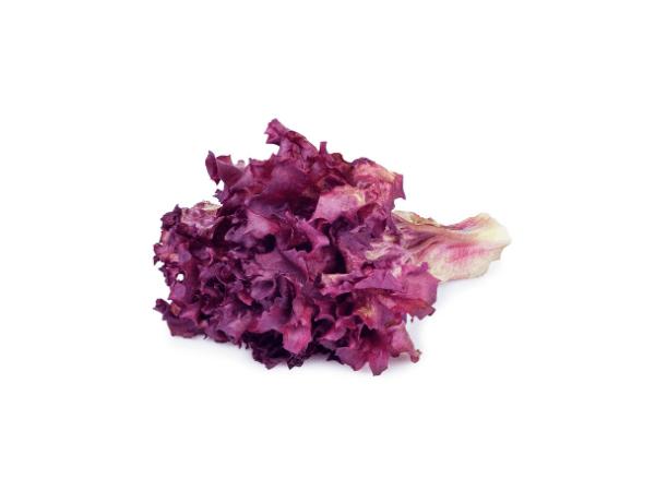 Salata lolo roso